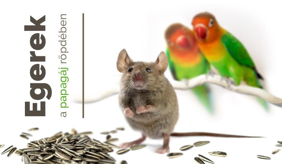Egerek a papagájok röpdéjében